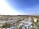 Cvetković, Jastrebarsko, poljoprivredno zemljište plantaža aronije 9725m2